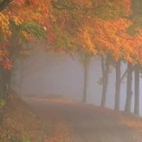 Colori d'autunno inoltrato verso...il tempo di Avvento